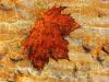 leaf-on-wall-b359a851062fb4c940309b49386b085b6c0d229c