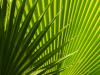 patterns-in-green-3d7955a2d0e0c96d3397e6414ea89f9f1bfe95a4
