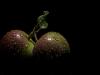 apples-f395cbc995556683a4c99b34b72f061b7e5be005