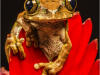 2nd Place Marbled reed frog By Michelle Howell