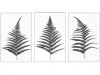 Prints 2nd Place Fern leaves By Chris Goodacer
