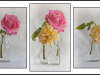 Prints Commended Just Some Roses By Angela Crutchley-Rhodes