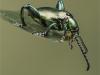 Digital Commended Green Frog Legged Beetle  (Sagra buqueti)By Paul Wagstaff