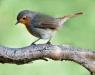 15-335-robin-small-annual-digital-applied-02-11
