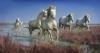 cargue-horses