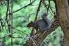 bob-gibson-squirrel