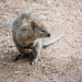 phil-gledhill-487-october-online-comp-quokka
