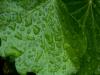 raindrops-5627c815a2590a6f8023e114225b710fae56979a