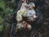 tree-bark-8ff85e2d84e5d1cb5be807cdcd98f3d91dd60f8c