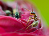 Ant no Dec - Dianne Pitchford