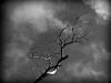 Stormy Skies over Dead Oak