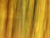 Beech Colours