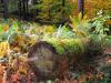 Burnsall Wood