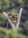 Applied 1st Place - A Trio of Harvest Mice - Michelle Howell
