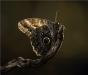 Applied 3rd Place Giant Owl Butterfly By Nigel Hazell
