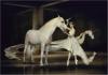 2nd Place The Last Unicorn By Jane Lazenby