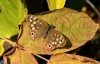 2nd - Speckled Wood Butterfly By Jean Phillips