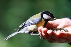Bird in the Hand - Daniel Jeffery