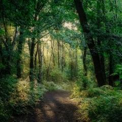 Seckar Woods After The Trip_by_McMillen, Ian