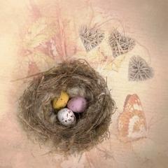 Nest_by_Sallett, Sally