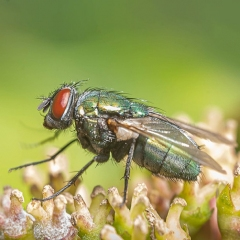 A Fly by Tim Jonas