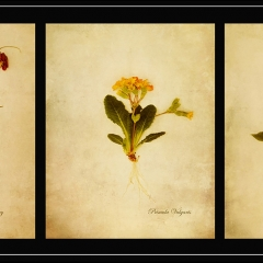 3rd - Botanical Study from My Garden by Harry Wentworth