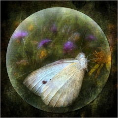 Commended - Trapped by Sally Sallett