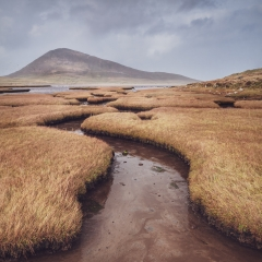 The Northton Saltmarshes by Steven Wood