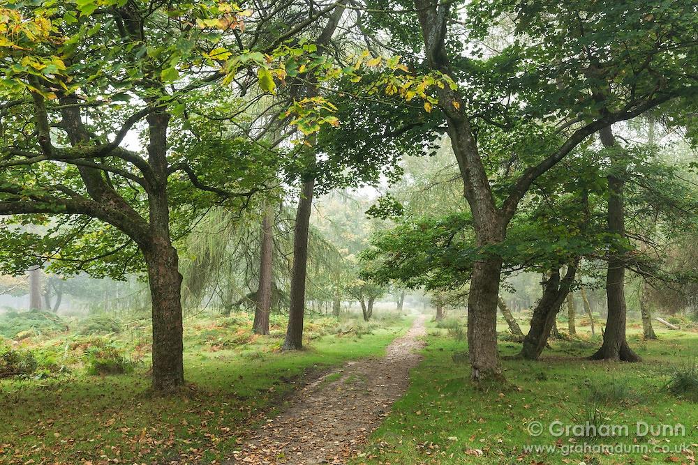 Longshaw Estate woods - Peak District