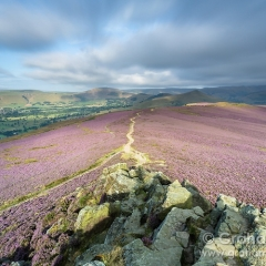 Win Hill heather & the Hope Valley - Peak District
