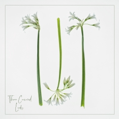 Commended - Three Cornered Leeks by Sally Sallett