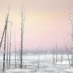 Skeletal Trees Yellowstone - Tonbridge