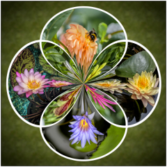 Commended - Polar-Flowers-by-Trevor-Bottomley