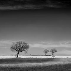 Three-Trees-and-a-bike-Walton
