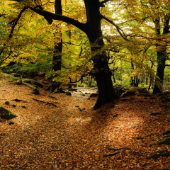 3rd Place - A Carpet Of Gold by Neil Carter