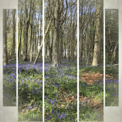 Commended - Bluebell Wood Panel By Sally Sallett