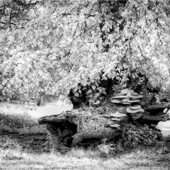 Highly Commended - The Stump by David Kershaw