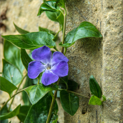1st Place - Periwinkle by Peter Wells