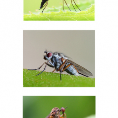 Highly-Commended_Flies-by-Neil-Clarke