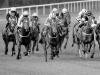 Paul Wagstaff CPAGB - Its Anyones Race (Scored 21)
