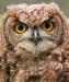 owl7-sm