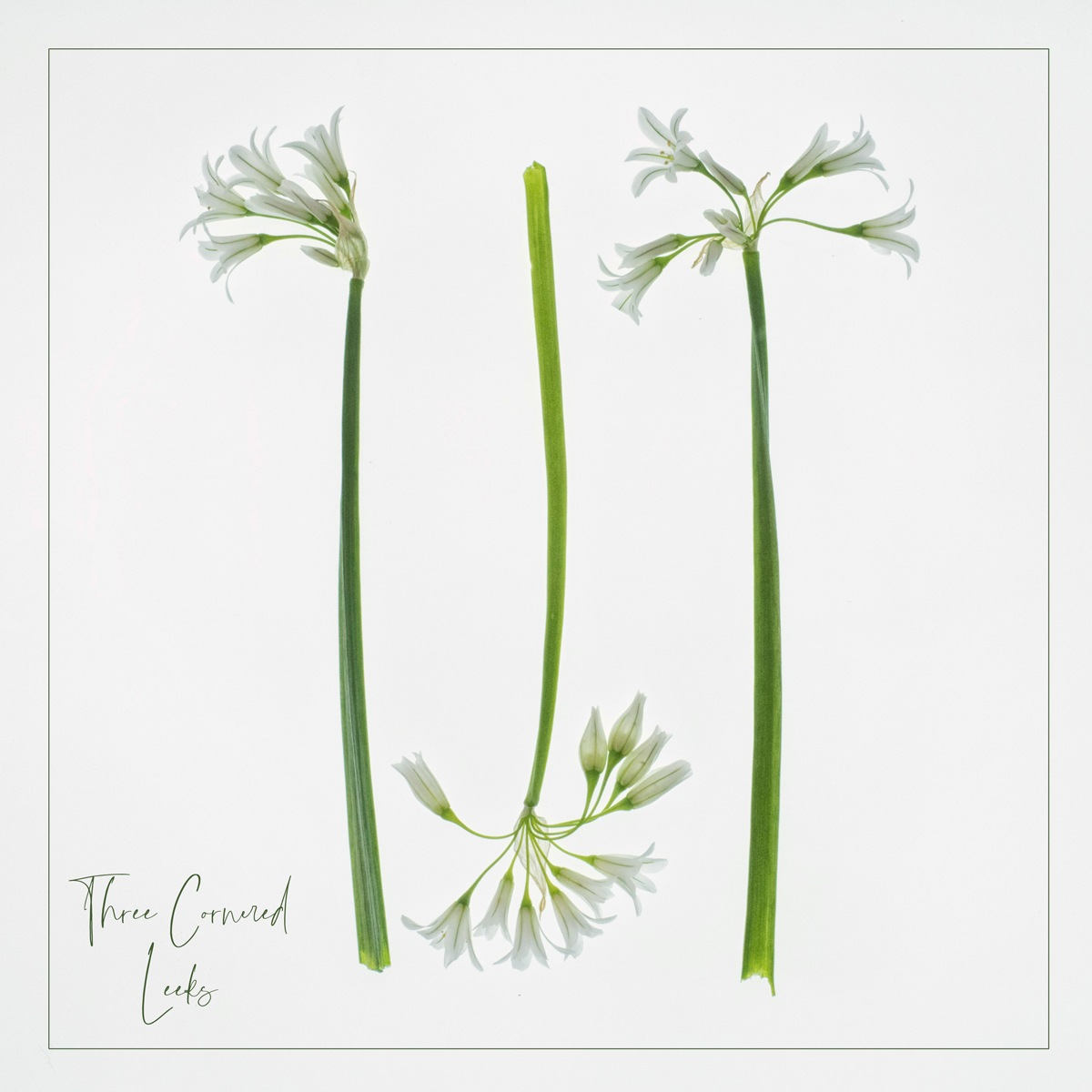 Three Cornered Leeks