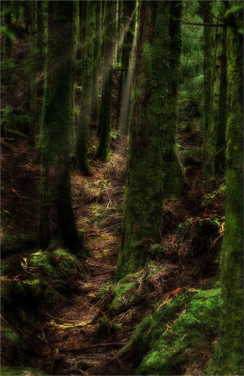 June in the Woodlands